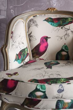 Ptaki jasne   Studio Rococo