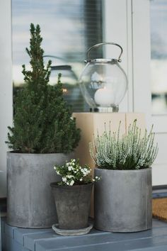 HOUSE & GARDEN: 65 plantation ideas for balconies and autumn gardens - decorating ide . - HAUS & GARTEN: 65 plantation ideas for balconies and autumn gardens – Decorating Ideas HAUS & GAR - Small Cottage Garden Ideas, Small Garden Design, Home And Garden, Cottage Gardens, Winter Balkon, Plantas Indoor, Patio Plants, Garden Plants, Garden Hedges