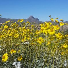 Wildflowers In Bloom With Sombrero Peak And Blue Sky The Background Tucson Arizona Photo Via Instagram By Ascta2 Gracie Birthday Activities