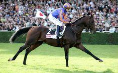 Hurricane Run Cavallo da corsadi razza purosangue inglese, campione nel Regno Unito nato nel 2002 e deceduto il 14 dicembre 2016. Generato daMontjeu eHo