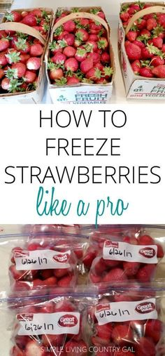 My super simple hack to freeze your strawberries perfectly every time! Tired of ice covered berries all frozen in one clump? Use my super simple checklist to freeze perfect strawberries every single time! Freezing Strawberries, Freezing Fruit, Frozen Strawberries, Frozen Fruit, Freezing Vegetables, Fruits And Veggies, Food Storage, Storage Ideas, Freezer Storage