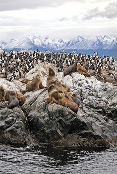 Pinguïns and Seal - Argentina