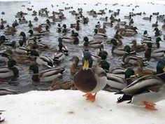 In the winter Birds, Winter, Animals, Winter Time, Animales, Animaux, Bird, Animal, Animais