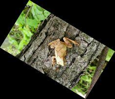 Tree ribbitter