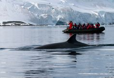 Minke Whale and Zodiac at Paradise Harbour, Antarctica