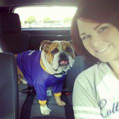 LSU Bulldog!
