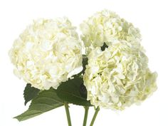 flower types - - Yahoo Image Search Results