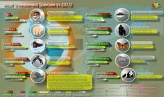 Teach & Learn about Most Threatened Animal Species, Global climate change and deforestation are only a couple of factors that contribute to the extinction of animals on this planet. It is important to remember that there is no turning back when a species becomes extinct. Here is a list of animal species that were hanging in the balance during 2010.