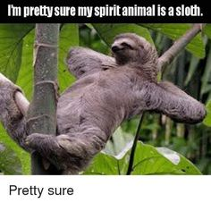 Looking for funny sloth memes? Look no further, here are 10 of the funniest sloth memes out there! Clean Funny Memes, Funny Cat Memes, Funny Cat Videos, Funny Dogs, Sloth Memes, Funny Sloth, Hilarious, Funny Quotes, Animal Memes