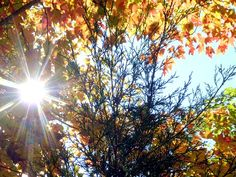 I took this photo last year–the trees don't quite look like this yet! I love this time of year! Last Friday I shared some of the free fall-themed packets and indoor activities you can do with your 3-6 year old, but there are so many other great fall...