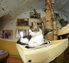 Unos 80 gatos custodian las obras de arte del museo ruso Hermitage. Estos gatos alejan a los ratones, pero también están en adopción.