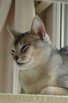 Sur l'arbre à chats :