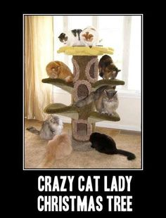 Crazy cat lady Christmas tree!! ;)