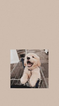 Aesthetic Pastel Wallpaper, Aesthetic Backgrounds, Aesthetic Wallpapers, Animals Beautiful, Cute Animals, Simple Wallpapers, Aesthetic Pictures, Cos, Iphone Wallpaper