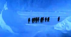A Penguin Makes An Adorable Noise After Slipping On Ice ♥