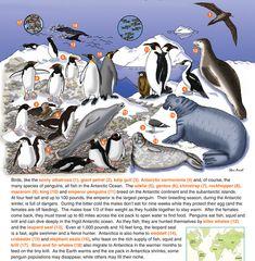 Arctic tundra biome essay