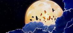 Öt fontos dolog, amit csinálj meg az ágyban, mielőtt felkelnél! - Egy az Egyben Moon, Celestial, Outdoor, The Moon, Outdoors, Outdoor Games, The Great Outdoors