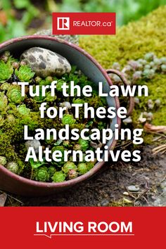 For many, landscaping means taking a step forward from the traditional grass lawn in favour of a unique environment encouraging biodiversity. Discover some key landscaping alternatives in our latest, on REALTOR.ca Living Room.  #landscaping #biodiversity #homeimprovement #DIY #curbappeal #yardwork #landscapedesign Yard Work, Outdoor Flowers, Landscape Design, Garden, Lawn, Curb Appeal, Landscape, Turf, Plants