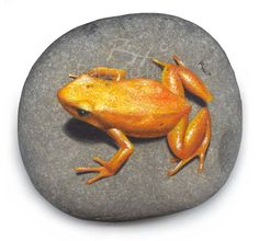Hand painted frog on a rock | www.robertorizzo.com