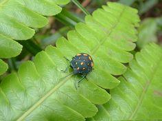 Cloud Forest Beetle by jbarrows on Etsy, $30.00