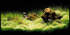 This Guide will tell you everything you have to consider when Designing and Aquascaping your aquarium.