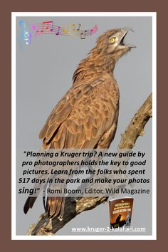 Birds of the Kruger National Park - the Kruger Park is a birder's paradise as there are over 500 species of birds that have been seen in the park! Lion Images, Night Photography, Wildlife Photography, Kruger National Park, National Parks, Cool Pictures, Cool Photos, Male Lion