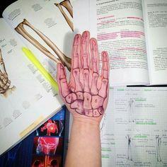 Surface anatomy of the hand Medicine Notes, Medicine Student, Anatomy Bones, Nursing School Notes, Medical School, Medical Careers, Medical Anatomy, Human Anatomy And Physiology, Anatomy Study