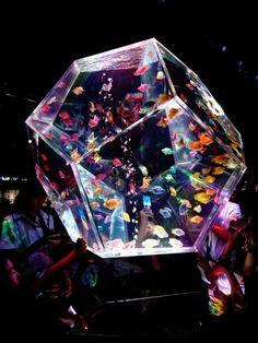 Home Aquarium Ideas: The Aquarium Buyers Guide *geometric fish tank. When I own a home I want a giant fish tank installed somewhere Aquarium Design, Home Aquarium, Aquarium Fish Tank, Fish Tank Wall, Wall Aquarium, Jellyfish Aquarium, Glass Aquarium, Aquariums Super, Amazing Aquariums