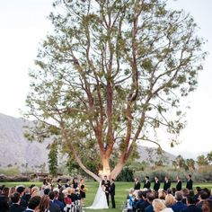 This tree is the perfect backdrop for a stunning wedding ceremony. It demands much attention and keeps everyone's eyes on the newlyweds!