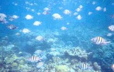 My first ever under water adventure! Snorkeling in Montego Bay off a glass bottom boat :)