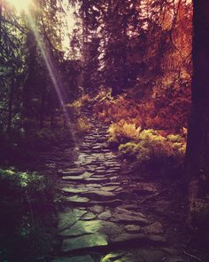 Magical pavement hidden in forest. Like in a fairytale.