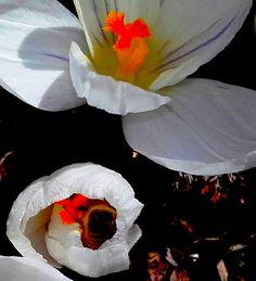 #BeeHappyNatura ecco le nostre amiche api quando sono in giro a raccogliere polline