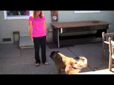 """Three second behaviors, easy chains, and high arousal- """"my dog gets too excited about the treats"""" & lumping"""