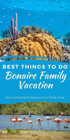 If you have ever thought about planning a Bonaire vacation with family, we are here to help. Here is everything you need to know from activities, to accommodations, to transportation. This is the Bonaire travel guide you need to help plan your trip. - Multigenerational Vacations |Bonaire| Bonaire travel| Bonaire vacation| Bonaire things to do| diving travel| travel packing list|