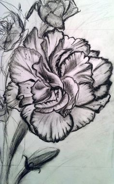 Original Carnation Charcoal Drawing by AmandaRoseGallery on Etsy, $80.00
