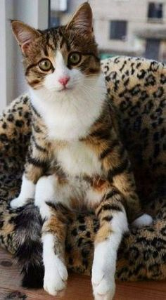 The cutest cat!