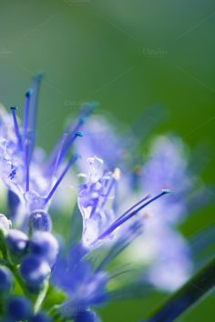 Small, Blue, Flower, Green, Portrait by dg. seaton on @creativemarket