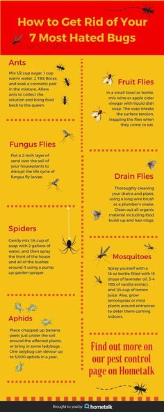 Rid/deter certain bugs safely w/o chemicals