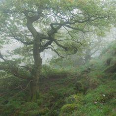 Bolehill Wood by Paul Newcombe