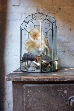 A Taxidermy Study of a Barn Owl in a Victorian Glass Terrarium