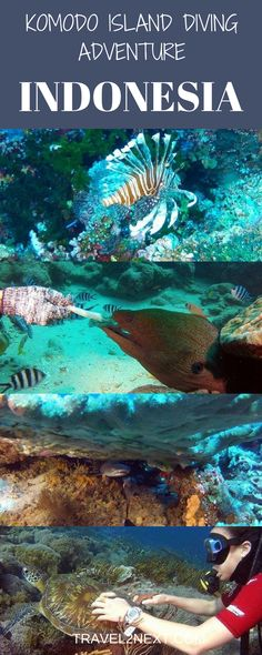 Komodo Island Diving Adventure Video. Morays, turtles and sharks. Flores, an island east of Komodo is home to Komodo dragons and the access point to a Komodo Island diving adventure in Komodo National Park.