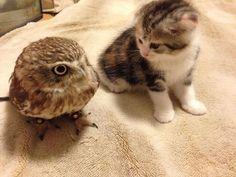 Fuku, a coruja, e Marimo, o filhote de gato | Virgula