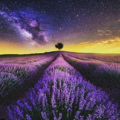 """""""We are shaped by our thoughts, we become what we think. When the mind is pure, joy follows like a shadow that never leaves."""" - Buddha ----------------------------- Lavender fields, Madrid. Spain Credit:@fotografia_jesusmgarcia☺🚀 #space_photography_eu #space #photography #astrophotography #astronomy #universe #cosmos #galaxy #nebula #stars #planet #nasa #science #photooftheday #amazing"""