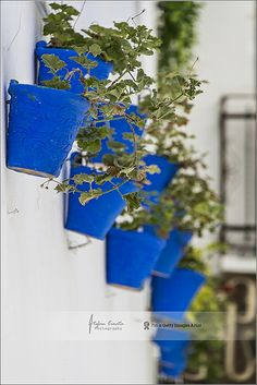 Blue delight | Cordoba, Spain