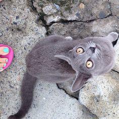 Buenos y felinos días!  #cat