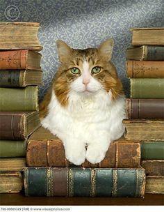 Cat loves books!