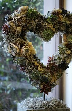 Valentine's Day window decoration using succulents and tylandsias at Phillo Flowers florist in London, UK