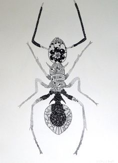 'Ant' - Penelope Kupfer