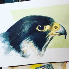 Falco pellegrino Watercolors, Owl, Bird, Animals, Water Colors, Animales, Animaux, Owls, Birds