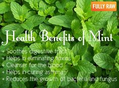 My Fresh Mint is on and loving the Health Benefits plus a GREAT Mosquito Repellent for my porch this summer.